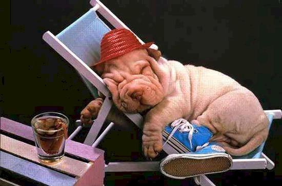 http://www.chwilkawytchnienia.com/Usmiechnij_sie/images/funny-picture-1.jpg